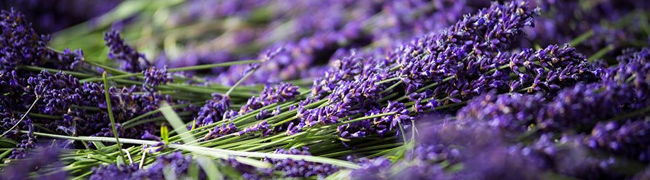 Port Arthur Lavender Menu